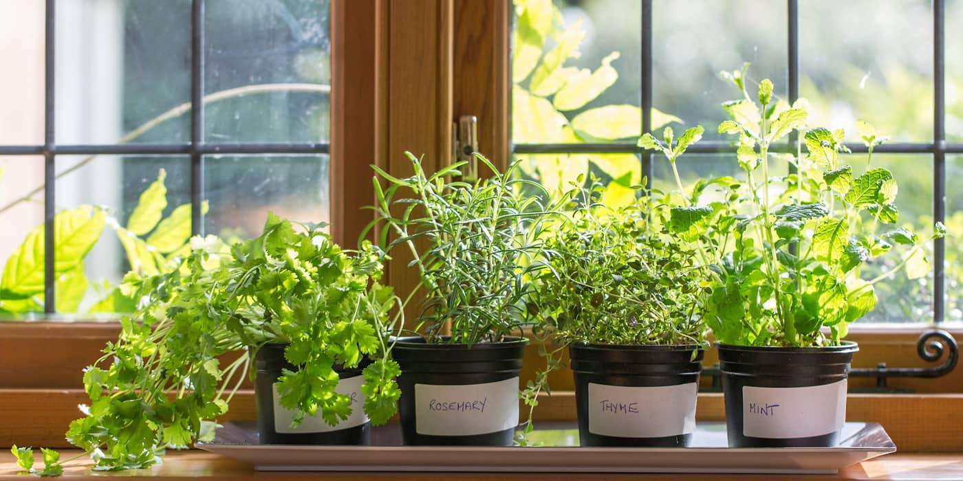 Как в домашних условиях вырастить зелень зимой на продажу