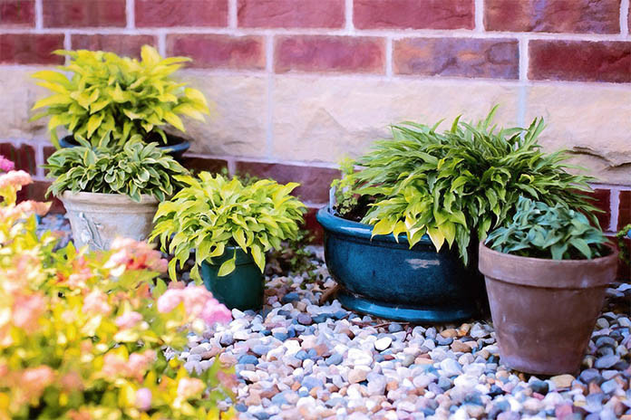 avoid shady areas for indoor plants