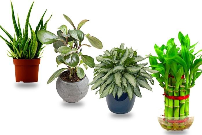 different house plants