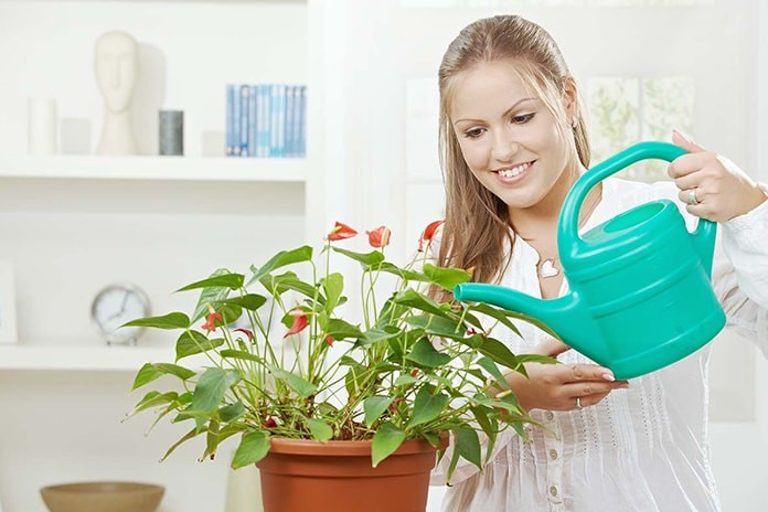 kitchen-planting