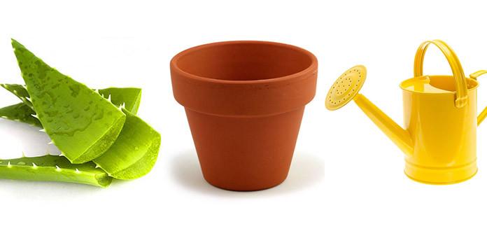 How to plant aloe vera part-1