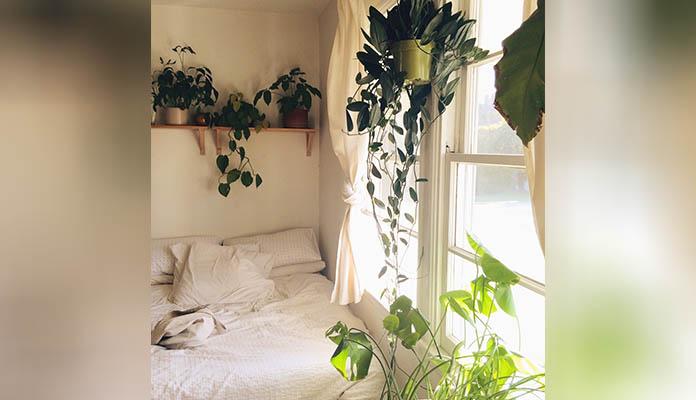 Calming Greens