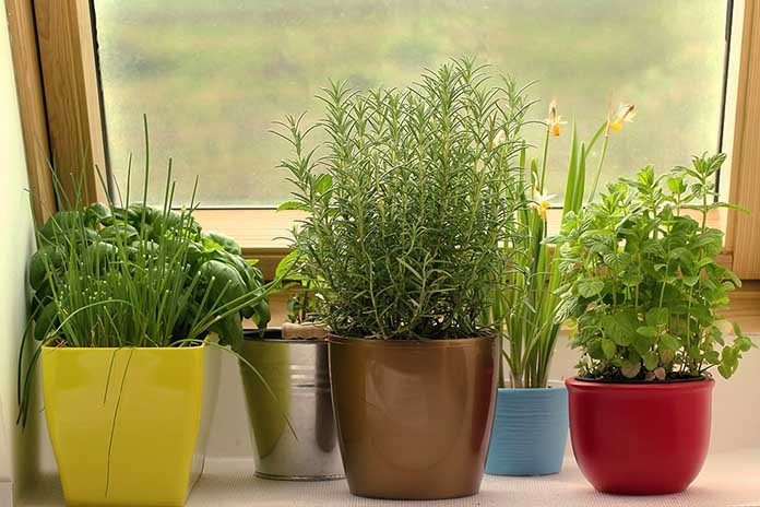 Container Plants You Can Grow Easily