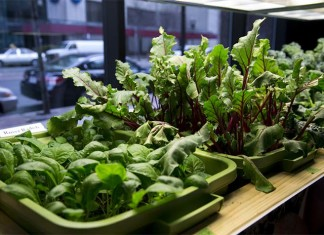 Five Step to Grow Indoor Vegetable Garden
