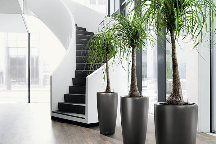 artificial plants to redecorate your home | livinghours Artificial Floor Plants