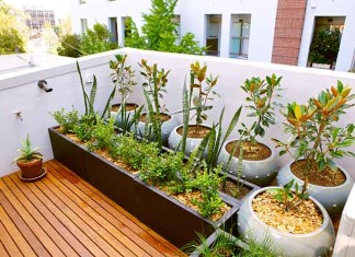Roof Top Gardening