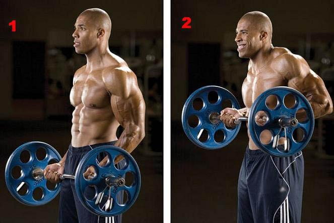 Biceps 4