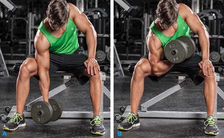 Biceps 5