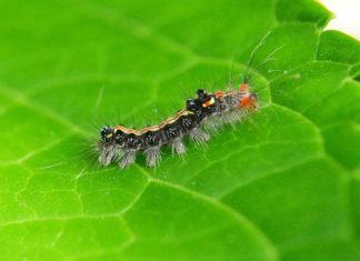 Dangerous Garden Pests