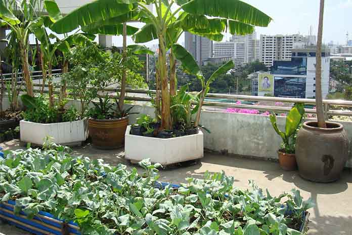 Edible Roof Garden Part 15