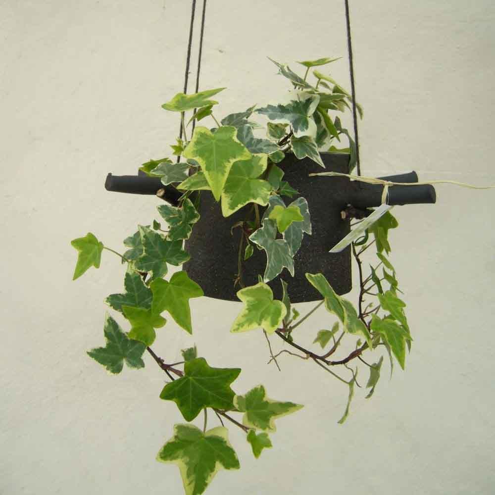 Four Horns Pot Planter