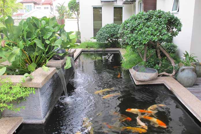Roof Garden With A Pond