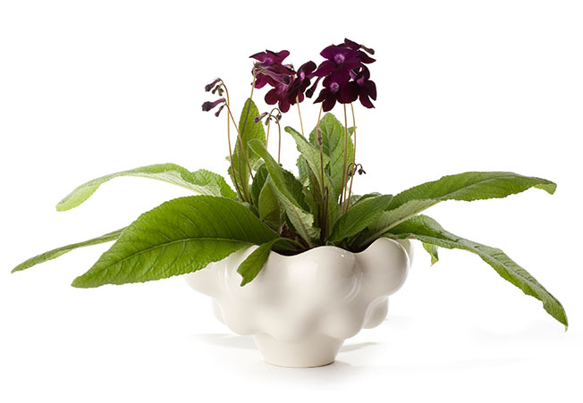 Top 15 Indoor Flowering Plants Livinghours