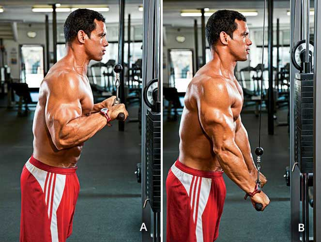 If You Are Looking For A Great Triceps Bodybuilding Workout Start With This Exercise Compound Activates The Lateral Head Of Your