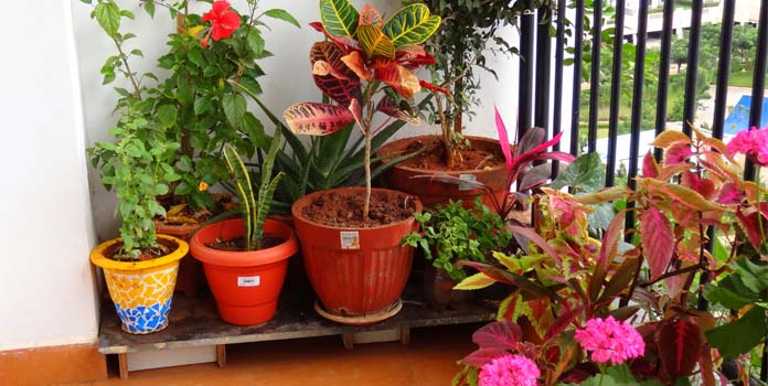Choose your balcony plants wisely