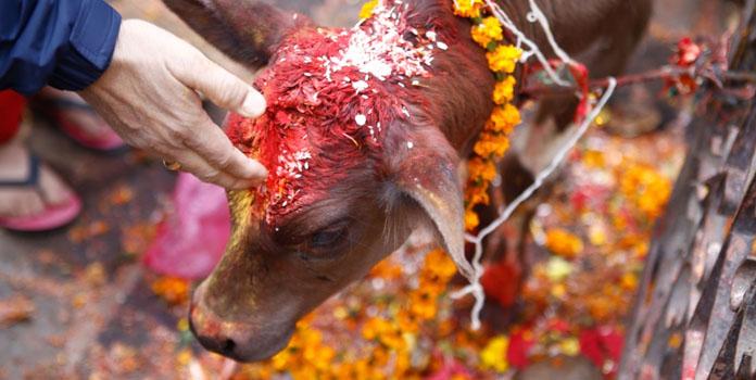 tihar-diwali-of-nepal