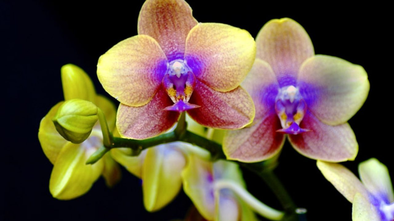 Top 10 Most Incredibly Rare Flowers In The World Livinghours