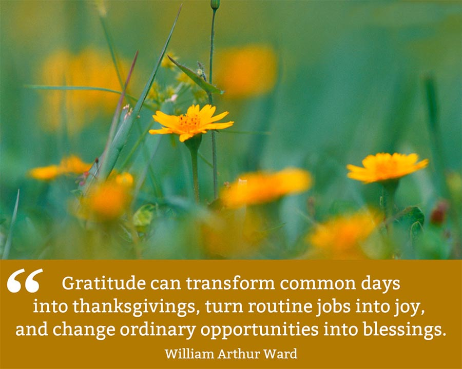 Gratitude can transform common days into thanksgivings, turn routine jobs into joy, and change ordinary opportunities into blessings