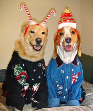 dogs-ugly-christmas-sweater04