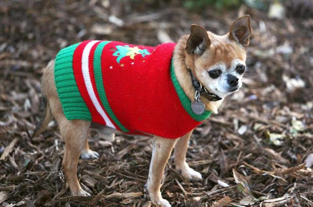 dogs-ugly-christmas-sweater08