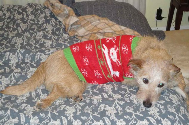 dogs-ugly-christmas-sweater09