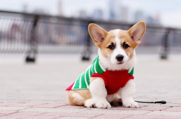 dogs-ugly-christmas-sweater11