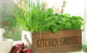 kitchen gardening
