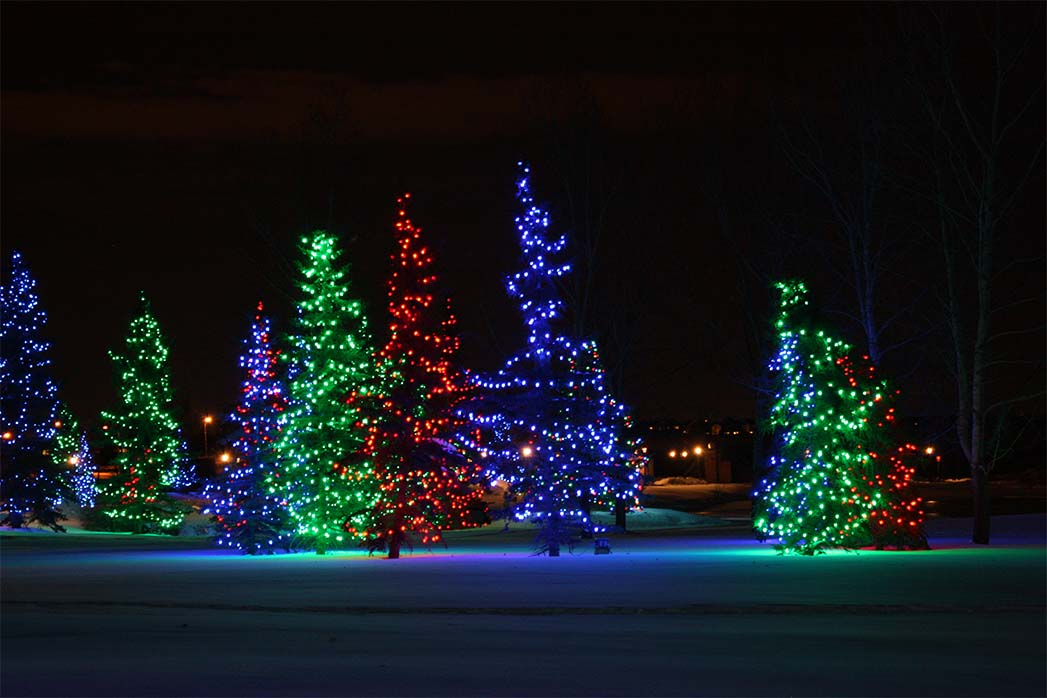 mesmerizing-christmas-tree-lighting