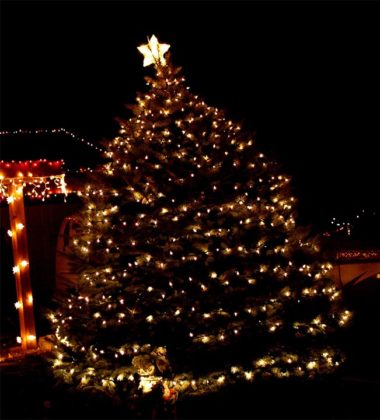 outdoor-christmas-tree-decorations-05