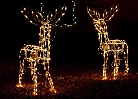 christmas-reindeer09