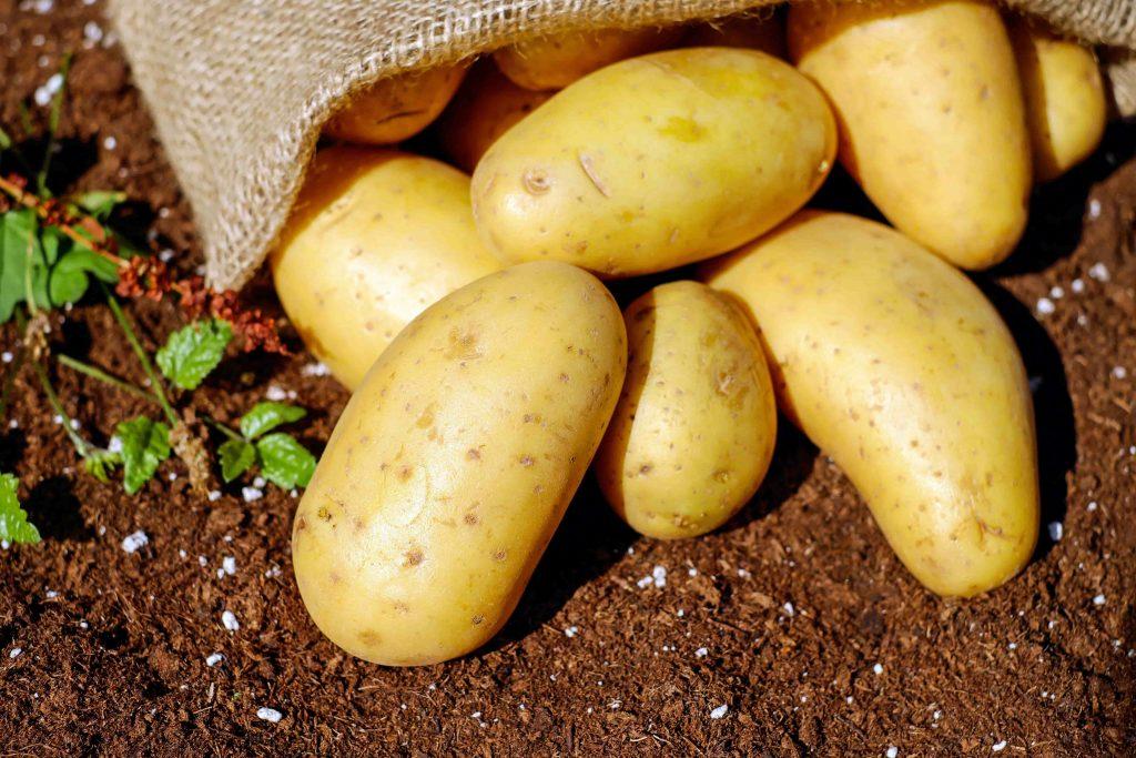 potatoes can help you in muscle gain