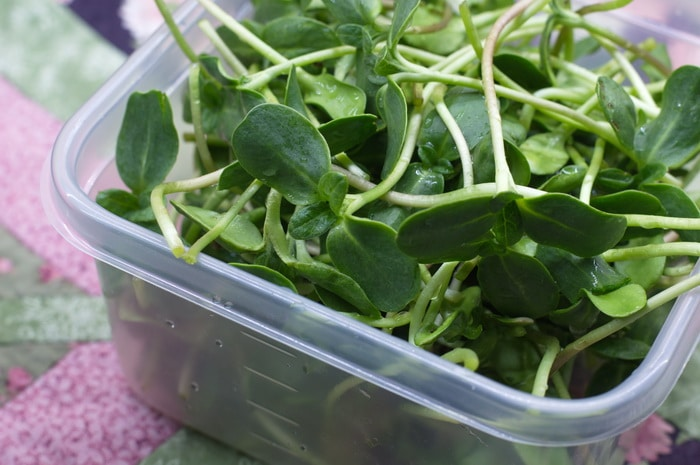 benefits of sprouts- sunflower sprouts
